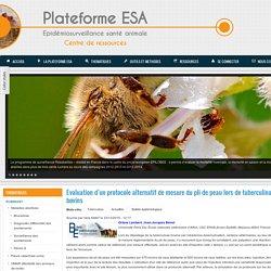 PLATEFORME ESA 23/12/15 Evaluation d'un protocole alternatif de mesure du pli de peau lors de tuberculination chez les bovins