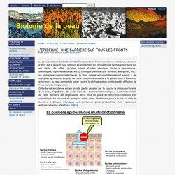 L'EPIDERME, UNE BARRIERE SUR TOUS LES FRONTS - [Biologie de la peau]