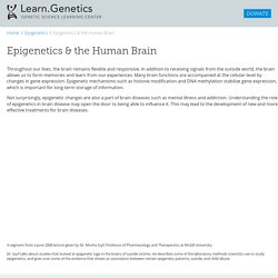 Epigenetics and the Human Brain