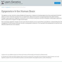 Epigenetics and the Human Brain