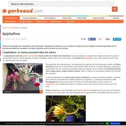 Epiphyllum : culture, entretien, espèces