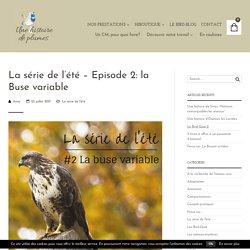 La série de l'été - Episode 2: la Buse variable - Une histoire de plumes