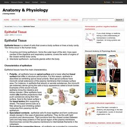 Epithelial Tissue : Anatomy & Physiology