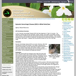DEPARTMENT OF NATURAL RESOURCES (Michigan) - Epizootic Hemorrhagic Disease (EHD)