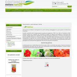 EPLEFPA de Coutances - Serres et jardins > Jardin botanique > Dahlias