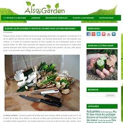 Planter les épluchures et restes de légumes pour les faire repousser