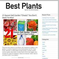 "21 Epsom Salt Garden ""Cheats"" You Don't Want To Miss!"