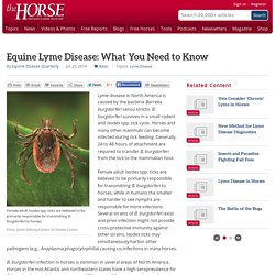 THE HORSE 25/07/14 Equine Lyme Disease: What You Need to Know