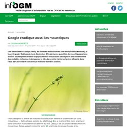 Google éradique aussi les moustiques - Inf'OGM - Veille citoyenne sur les OGM