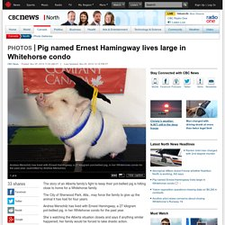 Pig named Ernest Hamingway lives large in Whitehorse condo - North