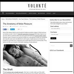 Erogenous Zones: The Anatomy of Male Pleasure