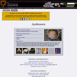 Ayahuasca Vault - (Build 20100401064631)