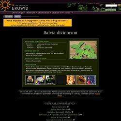 Salvia Divinorum (Ska Pastora) Vault