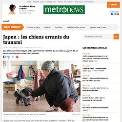 Japon : les chiens errants du tsunami