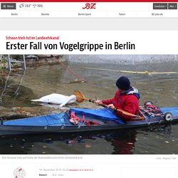 RBB ONLINE 18/11/16 Erster Fall von Vogelgrippe in Berlin