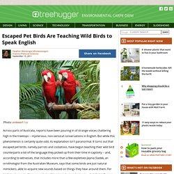 Escaped Pet Birds Are Teaching Wild Birds to Speak English : TreeHugger