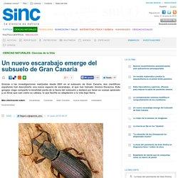 Un nuevo escarabajo emerge del subsuelo de Gran Canaria