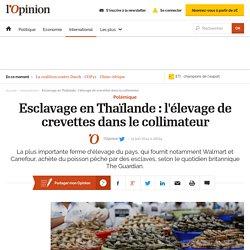 Esclavage en Thaïlande : l'élevage de crevettes dans le collimateur