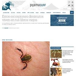 Estos escorpiones diminutos viven en tus libros viejos « Pijamasurf - Noticias e Información alternativa