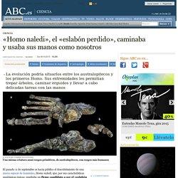 «Homo naledi», el «eslabón perdido», caminaba y usaba sus manos como nosotros