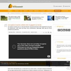 ACTU ENVIRONNEMENT 24/09/18 Les espèces invasives coûtent cher et gagnent du terrain