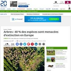 Arbres : 40 % des espèces sont menacées d'extinction en Europe - 20minutes