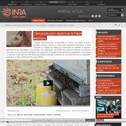 INRA 08/03/17 Des puces pour espionner le frelon asiatique