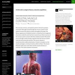 Huesos y músculos esqueléticos