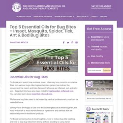 Top 5 Essential Oils for Bug Bites - Mosquito, Spider, Tick & Ant