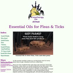 Essential Oils as Flea repellents