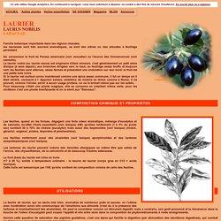 Laurier, Laurus nobilis : aromate, huile essentielle, médecine douce et phytothérapie
