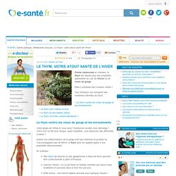 Thym : infusions et huiles essentielles