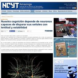 Nuestra cognición depende de neuronas capaces de disparar sus señales con lentitud y estabilidad