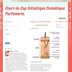 Cours du Cap Esthétique Cosmétique Parfumerie.: Biologie : Les Annexes Cutanée.