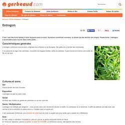 Estragon : achat, conseils de culture et utilisation