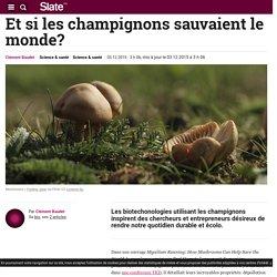Et si les champignons sauvaient le monde?