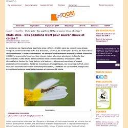 Etats-Unis - Des papillons OGM pour sauver choux et colzas ?