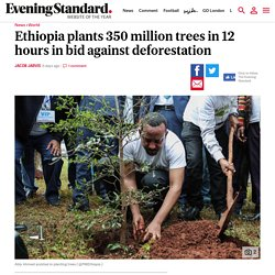 Ethiopia beats its goal and plants over 350 million trees in 12 hours