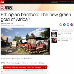 Ethiopian bamboo: The new green gold of Africa?