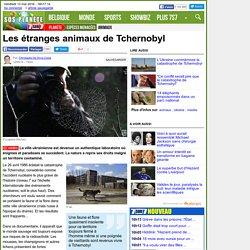 Les étranges animaux de Tchernobyl