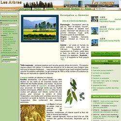 www.lesarbres.fr/eucalyptus.html