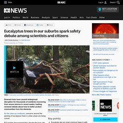 Eucalyptus trees in our suburbs spark safety debate among scientists and citizens