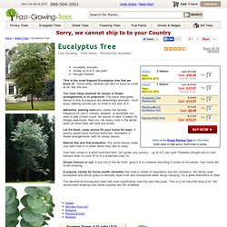 Silver Dollar Eucalyptus Trees & Eucalyptus Plants