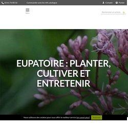 Eupatoire : planter, cultiver et entretenir - Nos conseils - Promesse de Fleurs