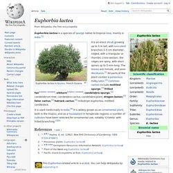 Euphorbia lactea - Wikipedia