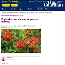 Euphorbias are winners for you and the bees
