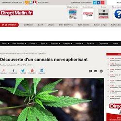 Découverte d'un cannabis non-euphorisant