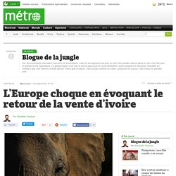 L'Europe choque en évoquant le retour de la vente d'ivoire