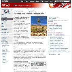 Swedes find 'world's oldest tree'