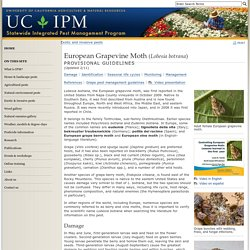 UNIVERSITY OF CALIFORNIA - NOV 2009 - European Grapevine Moth, Lobesia botrana: A New Pest in California